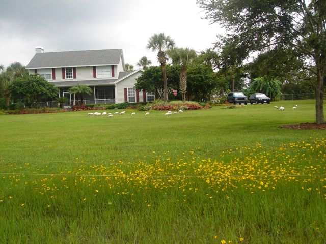 orlando landscaping