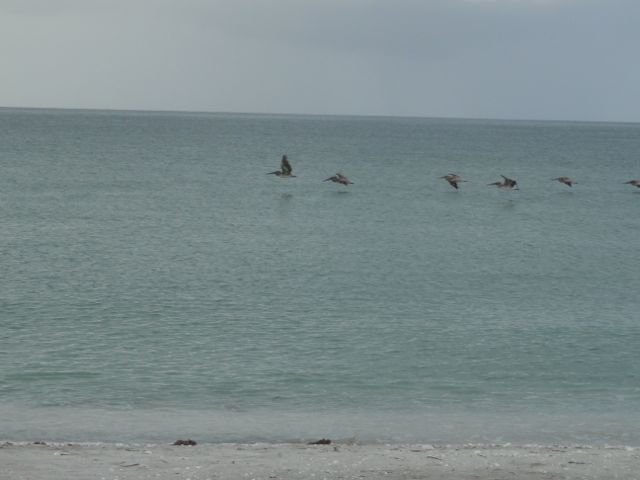 beach water fowl