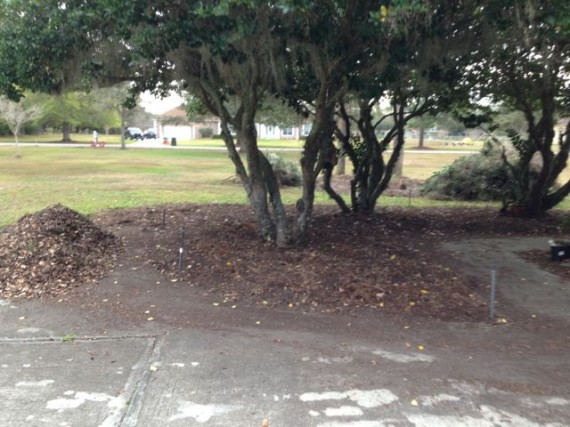 Orlando homeowner landscaping project - February 20, 2013