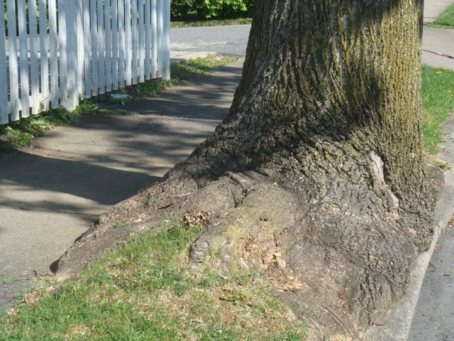 overgrown tree stump next to sidewalk