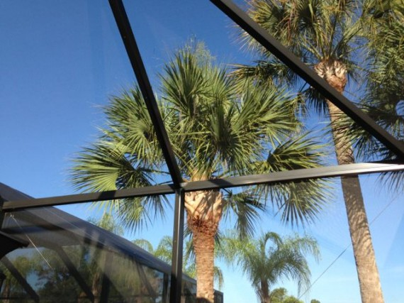 Florida Palm trees from inside screened pool enclosure