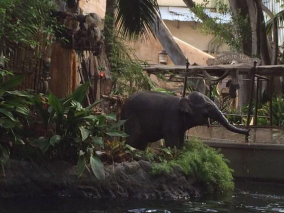 Disneyland Jungle Cruise baby elephant