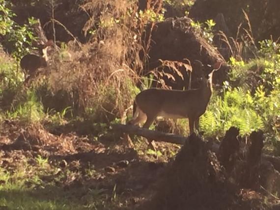 Disney's Fort Wilderness Resort and Campground wildlife.
