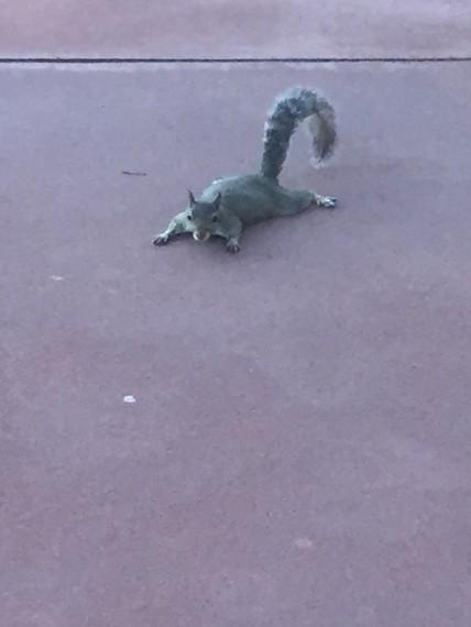 Squirrel at Epcot