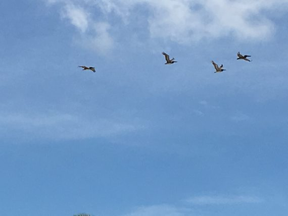 Pelican's at Sanibel Island