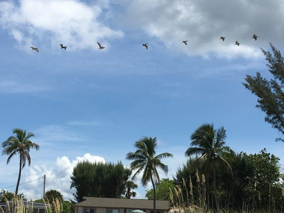 Pelican's at Sanibel Island