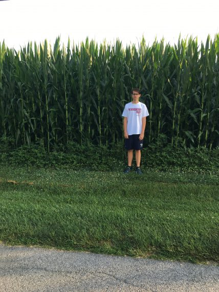 Corn field 10 feet tall