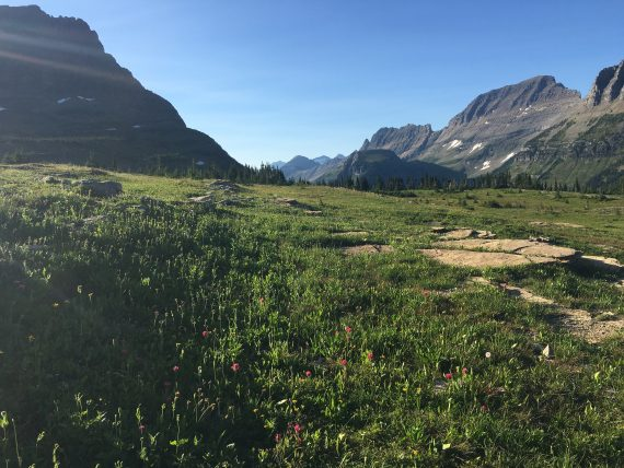 Logan Pass scenery