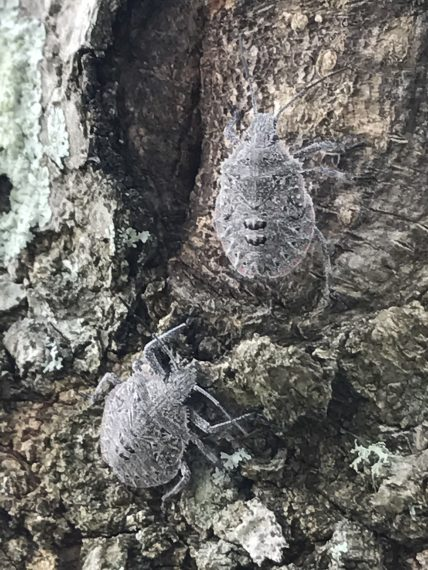 bugs on a tree