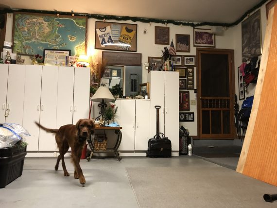 Irish Setter in garage