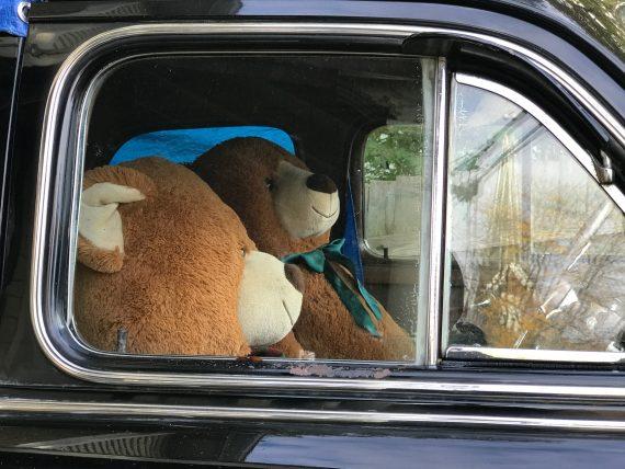 Teddy bears in car