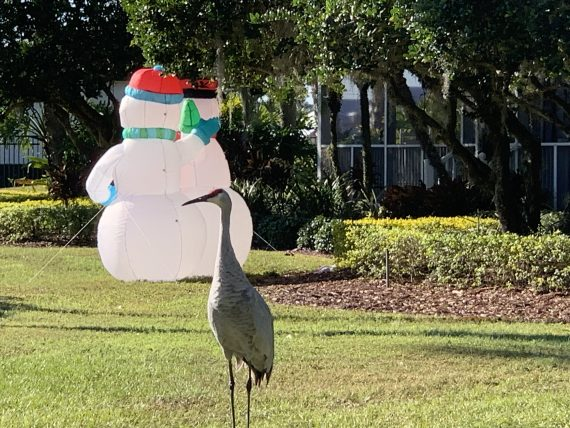 Snowman and Sand Hill crane