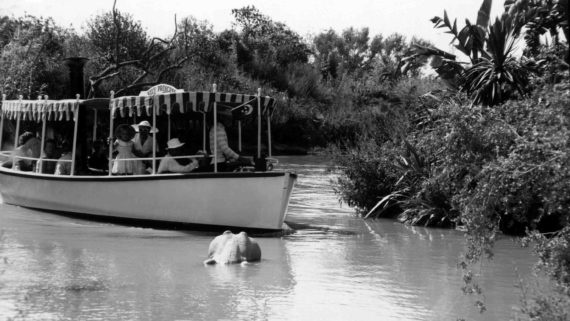 Jungle Cruise black and white photo