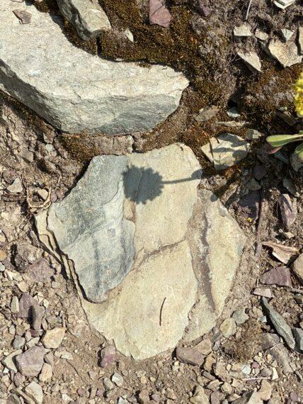 Flower shadow on rock