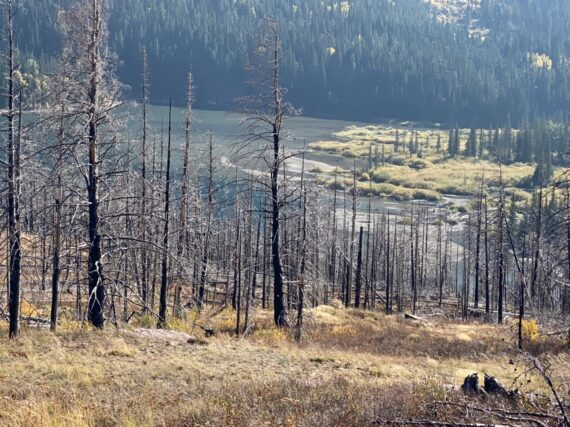 lake surrounded by burnt forest