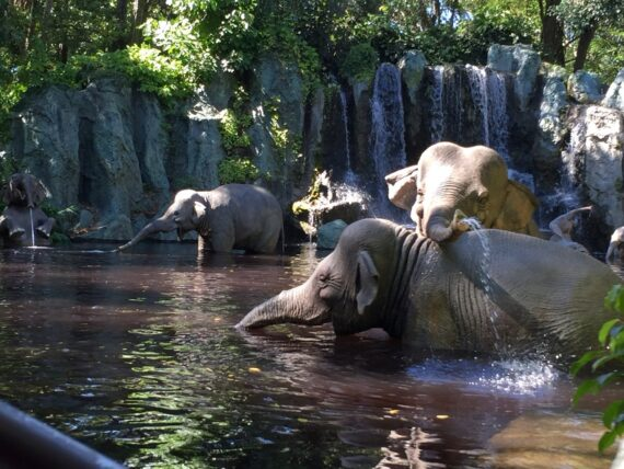 Elephant bathing grounds  on the jungle Cruise attraction