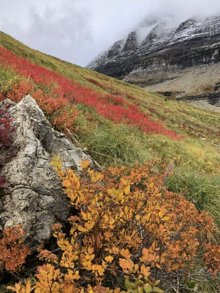 Autumn colors in mountains