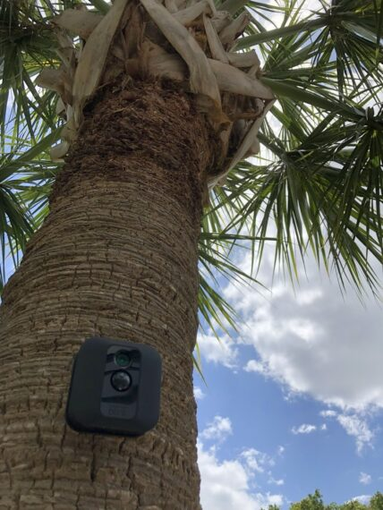Palm tree with security camera