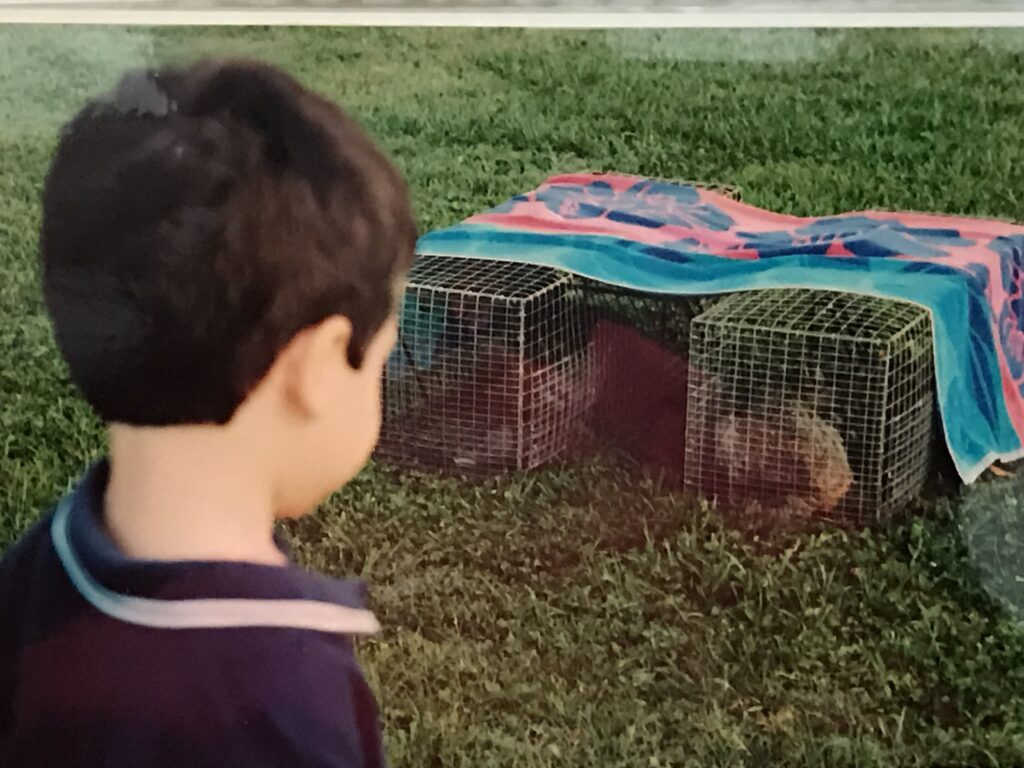small boy gazing at two small animal cages
