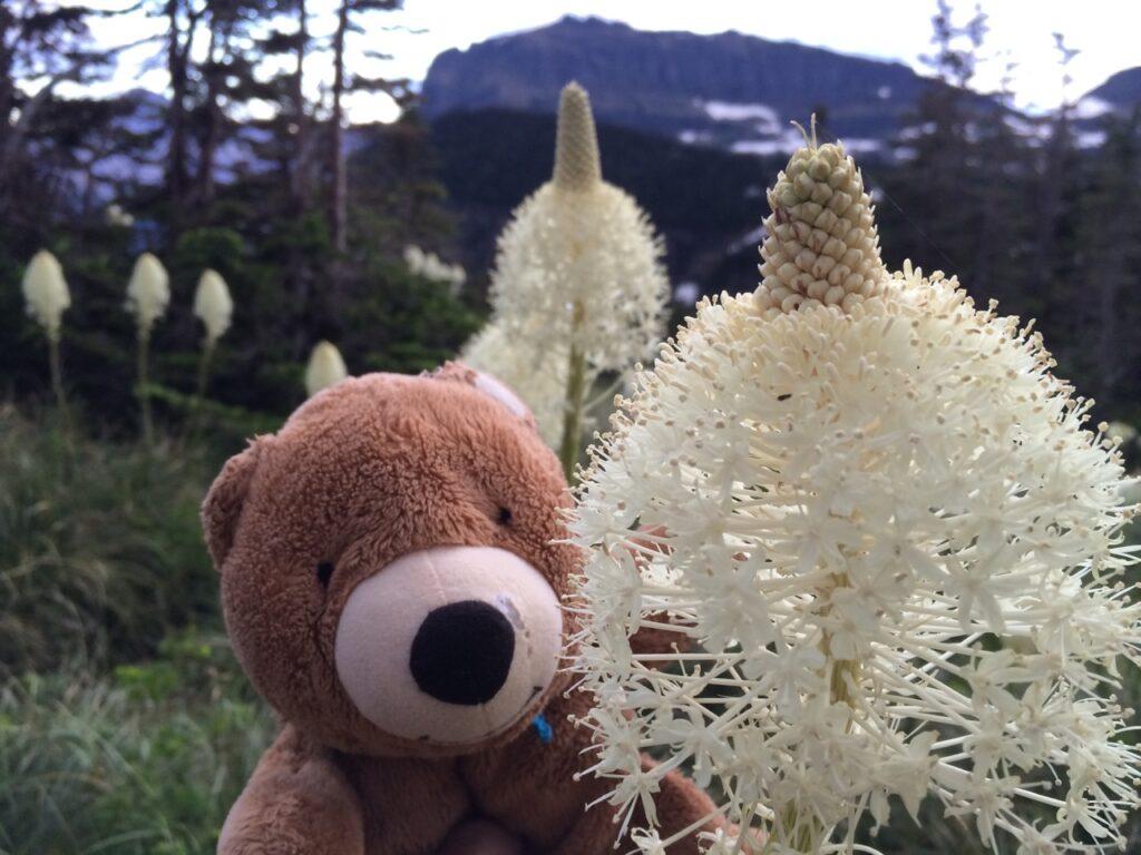 teddy bear in mountain wildflowers